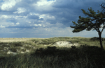 back dune habitat; Drakes Island by Joseph Kelley
