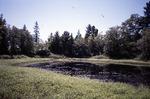 Adjacent Small Pond - Denbow Heath (CAL)