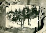 Olof Swenson's team of horses hauling log