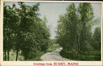 Greetings from Surry, Maine Postcard