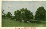Greetings from Surry, Maine Postcard - Cows in Pasture